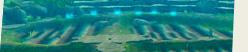 ムームー族の水耕地